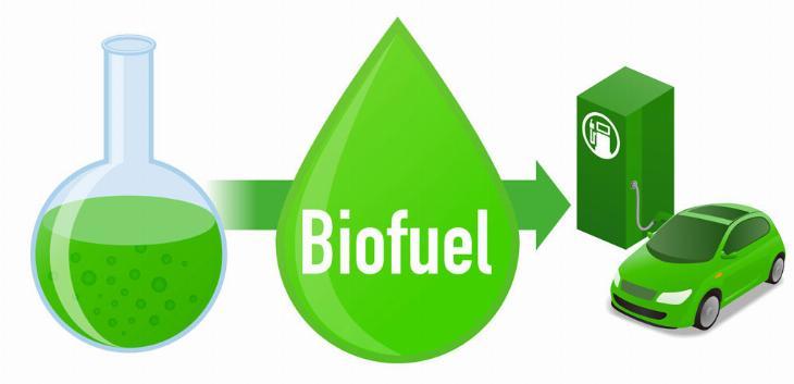 Mikroalge kao biodizel gorivo