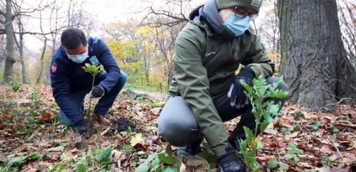 Počela akcija pošumljavanja Nacionalnog parka Fruška Gora